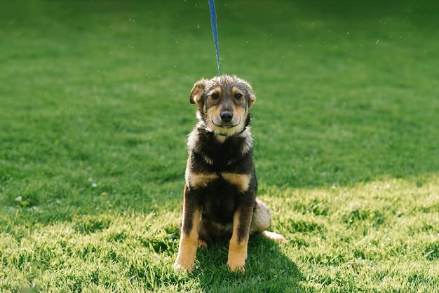 Грустная собака-метис грустно выглядит после дождя и ищет хозяев в питомнике