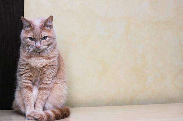 Печальный рыжий кот сидит, опустив голову и нахмурив брови.