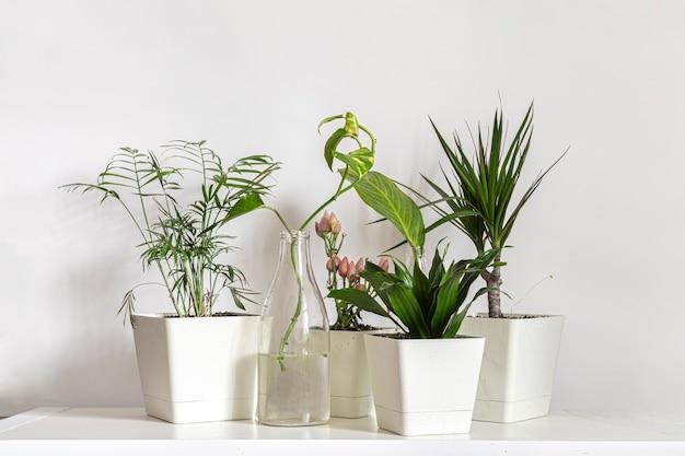 스칸디나비아 스타일의 가정 재배 녹색 식물 정원 선반에