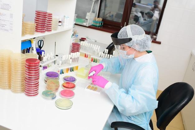 Ученый наполняет чашку петри слоем питательной среды и выращивает колонии микроорганизмов. бактериологическая лаборатория, бактериальный анализ