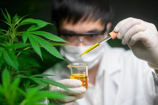 한 과학자가 실험실에서 cbd 기름 비이커를 들고 대마초 실험을 확인하고 분석하고 있습니다
