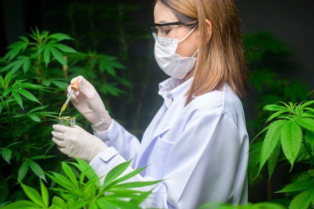 科学者は実験室でcbdオイルのビーカーを持って大麻実験をチェックして分析しています