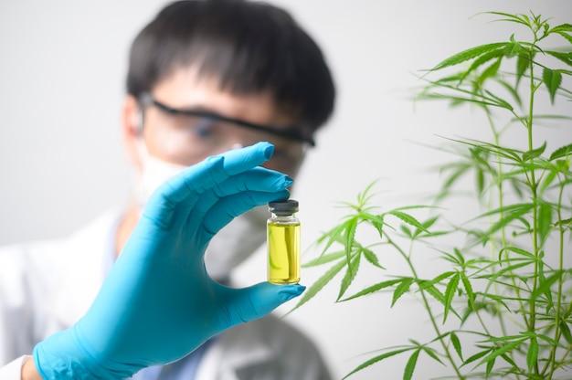 과학자가 대마초 사티 바 실험을 확인하고 분석하고 있습니다.