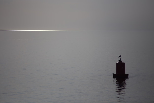 갈매기가 바다 한가운데 부표에 앉아 있다