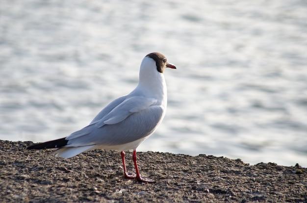 Чайка сидит на берегу