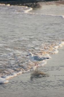Чайка стоит на пляже