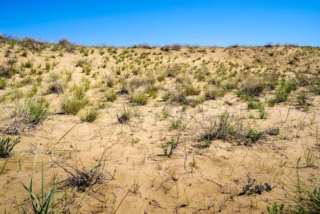 사구와 드문드문 식물이 있는 봄 사막의 한 부분