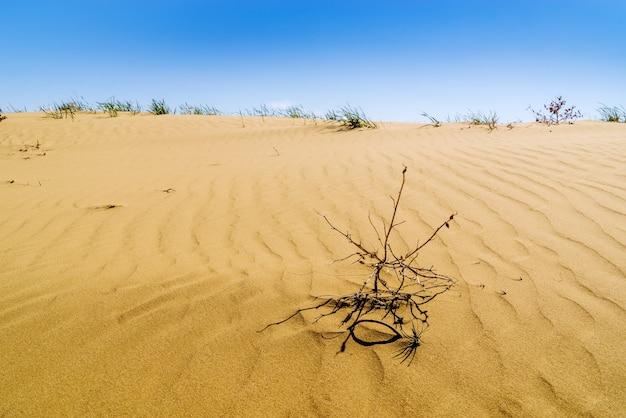 砂丘とまばらな植生のある春の砂漠のセクション
