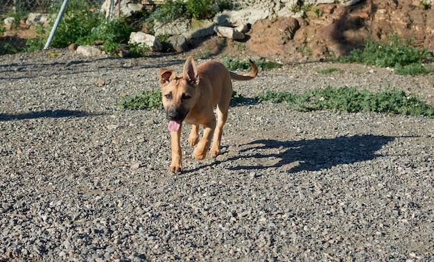 Выборочный фокус молодой собаки с тенью на земле