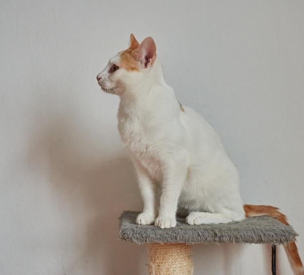 白い壁のそばに座っているかわいい猫の選択的なフォーカスショット
