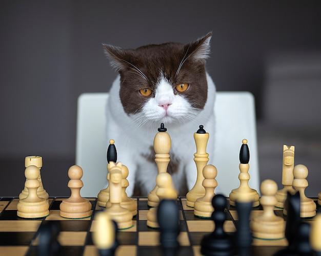 真面目な猫がチェスをしている