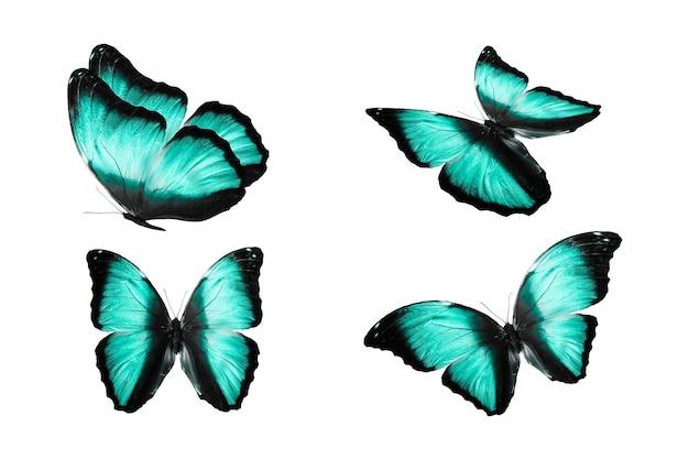 흰색 배경에 색색의 나비 세트가 격리되어 있습니다. 열대 나방. 날아다니는 곤충. 고품질 사진