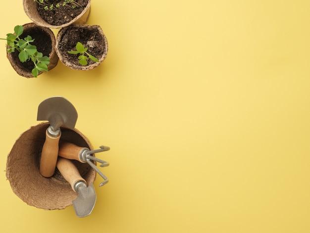 鉢植えの植物が付いている黄色い壁の園芸工具のセット。上からの眺め。あなたのテキストのための場所