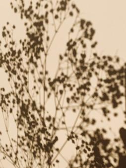 ベージュの壁に花の影