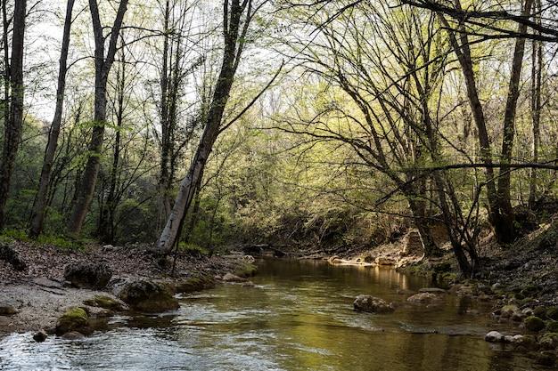 По камням течет мелкая река. сухие деревья склоняются над рекой. мистический лесной пейзаж.