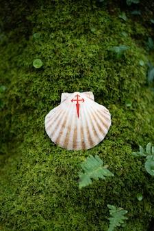 Ракушка с нарисованным красным крестом, символом пути сантьяго, поверх зеленого мха.