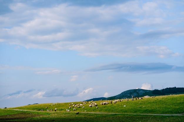 羊飼いは雲のある青い空を背景に緑の丘の中腹で羊の群れをかすめる