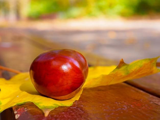 光沢のある茶色の栗の実は、晴れた暖かい秋の日のベンチの黄色いカエデの葉の上にあります