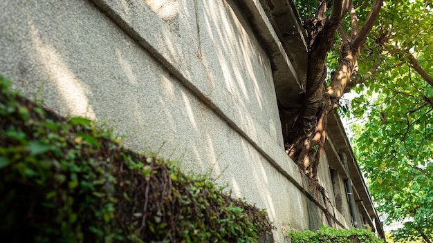 창과 격자가 있는 고대 돌담의 외부에 자라난 한 그루의 나무