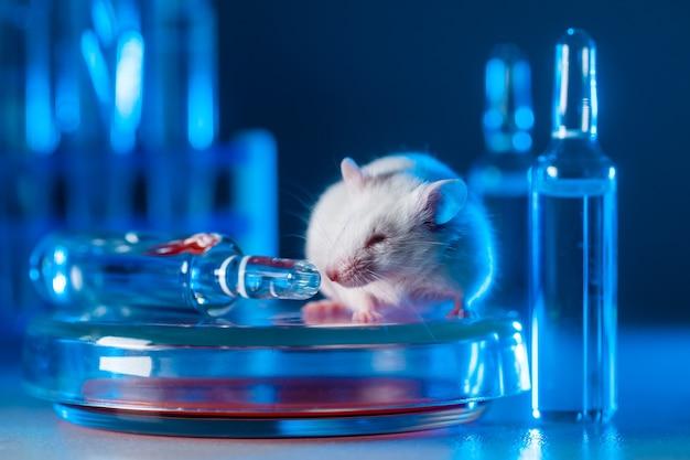 Маленькое животное сидит на стеклянной чашке петри, окруженное ампулами с лекарством в синем свете.