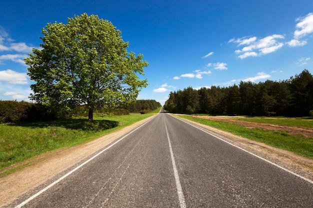 Небольшая асфальтированная дорога, проходящая через лес. весна