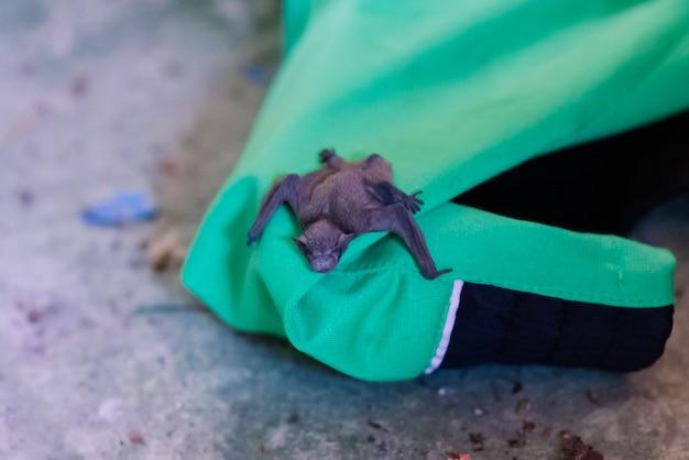 둥지에서 떨어진 작은 아기 박쥐