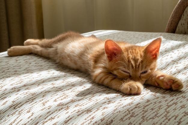 Маленький красивый рыжий полосатый котенок засыпает на диване