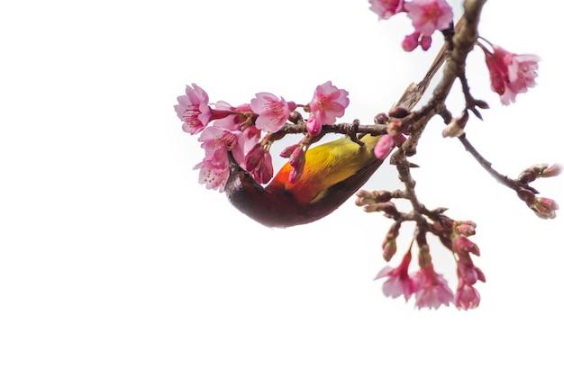 Маленькая птичка на дереве изолирована