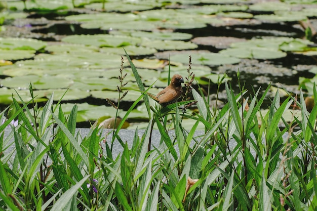 Маленькая птичка с ненуфаром в ботаническом саду