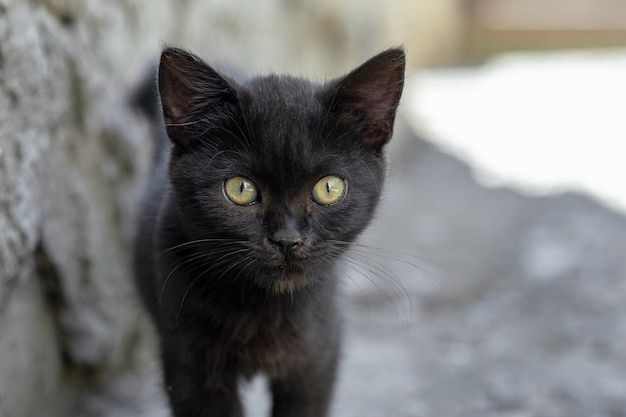 夏の暑さから日陰に隠れて表情豊かな小さな黒い子猫