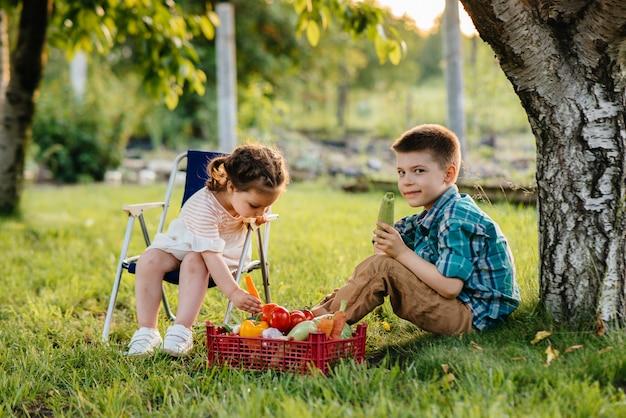 Маленький мальчик и девочка сидят под деревом в саду с целой коробкой спелых овощей на закате. сельское хозяйство, сбор урожая. экологически чистый продукт.