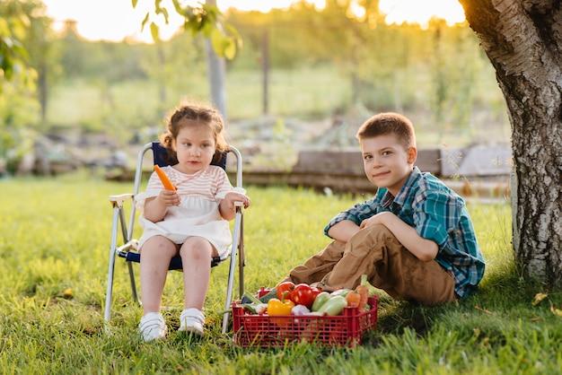 小さな男の子と女の子が庭の木の下に座って、夕暮れ時に熟した野菜の全箱を抱えています。農業、収穫。環境にやさしい製品です。