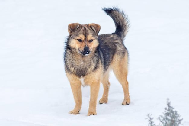 冬の雪の上の小さな茶色の犬が農場を守ります_