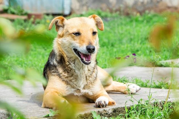 小さな茶色の犬が植物の間の庭で休んでいます