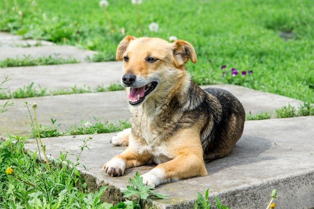 小さな茶色の犬が庭の小道に横たわっています