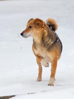 小さな茶色の犬が前足を上げて雪の中に立っています。冬の動物です。