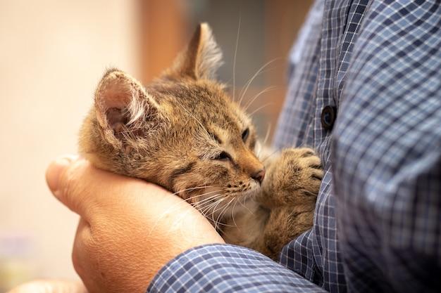 男の腕の中で目を閉じた小さな茶色の子猫。男は彼の腕に子猫を保持します