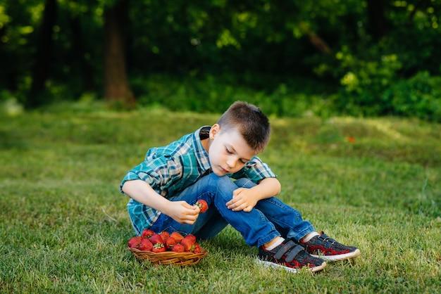 小さなかわいい男の子がイチゴの箱の横に座っています