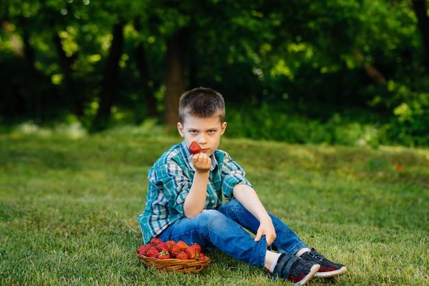 小さなかわいい男の子が、熟したおいしいイチゴの大きな箱に座っています。収穫。熟したイチゴ。自然でおいしいベリー。
