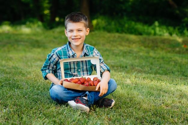 Маленький милый мальчик сидит с большой коробкой спелой и вкусной клубники. урожай. спелая клубника. натуральная и вкусная ягода.
