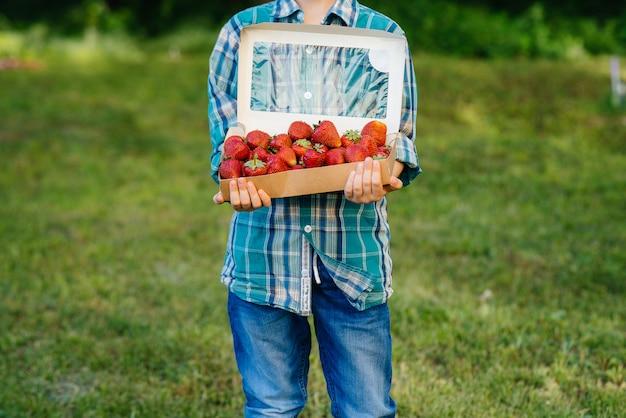 小さなかわいい男の子が、熟したおいしいイチゴの大きな箱を抱えて立っています。収穫。熟したイチゴ。自然でおいしいベリー。