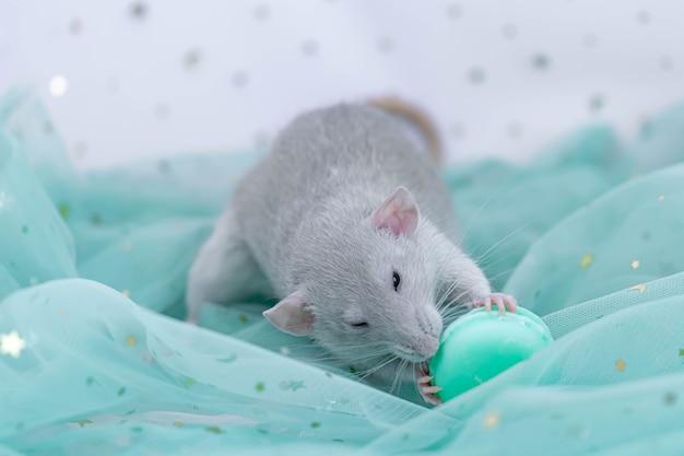 Маленькая милая серая декоративная крыса сидит среди складок мятной легкой и воздушной ткани с пайетками.
