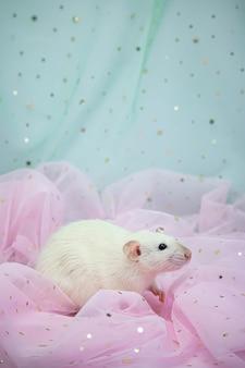 Маленькая милая белая декоративная крыса сидит среди складок мяты и розовой легкой и воздушной ткани с пайетками.