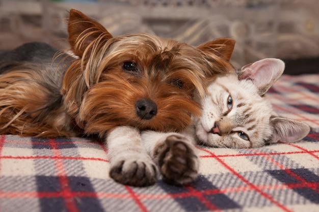 작은 개와 새끼 고양이가 집에 누워 렌즈를보고 있습니다.