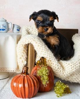 小型犬はヨークシャーテリアの子犬です。スペースをコピーします。