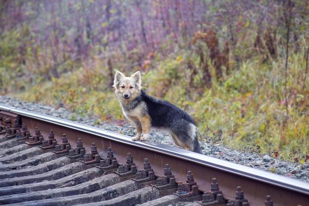 線路近くの小型犬。期待