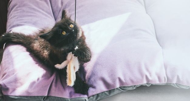 小さなふわふわの黒い子猫がおもちゃのティーザーで遊ぶ