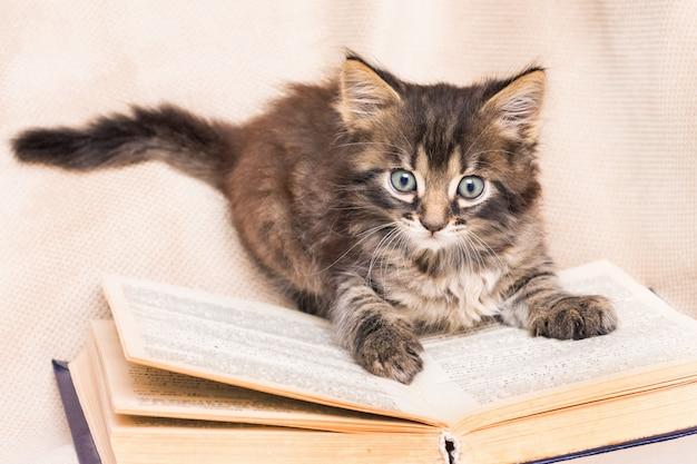 本に座っている小さなふわふわ猫