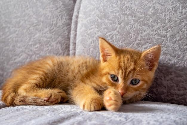 Маленький рыжий котенок лежит на диване и смотрит в камеру