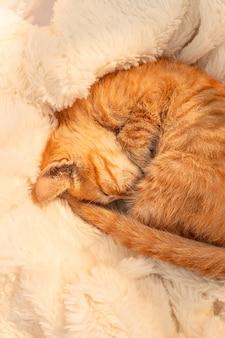 小さな生姜の子猫が居間のソファーの柔らかい毛布の上で眠ります。